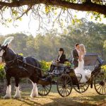 Charming Carriages