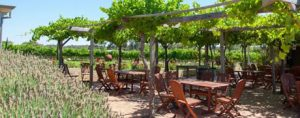 Discovery Parks – Perth Vineyards